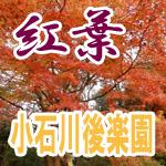 【小石川後楽園】紅葉を見に行こう!遊園地もいいけど300円で楽しめる庭園散策はいかが?