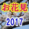 【桜満開2017】浦安の花見をコースで満喫。風呂付で買い出し・トイレ・安全!【首都圏から1時間以内】